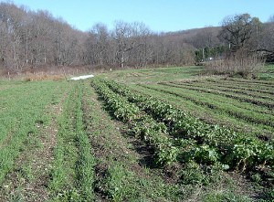Community Supported Farms