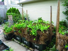 Growing a Straw Bale Garden