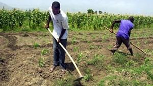 Monsanto in Haiti