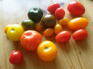 Choosing a Tomato Variety