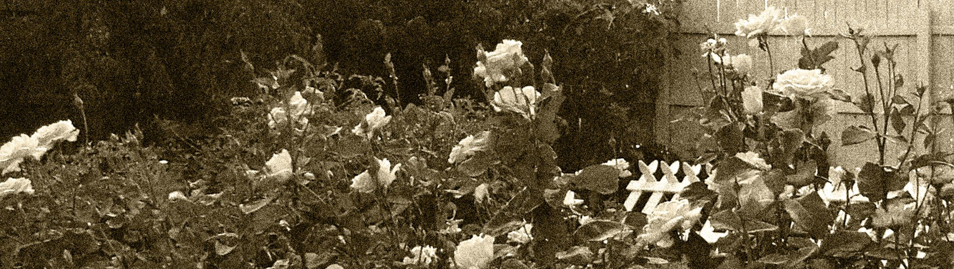 gardening-header